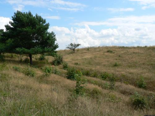 Graslandschaft mit Bäumen.