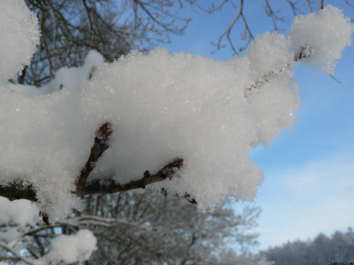 Ein Ast bedeckt mit Schnee.