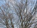Zum Bild Baumsilhouette