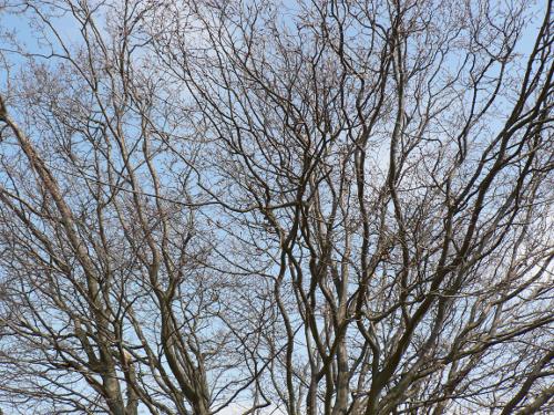 Verästelung eines Baumes.