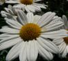 Zur Kategorie Pflanzen