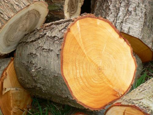 Frisch gesägtes Holz