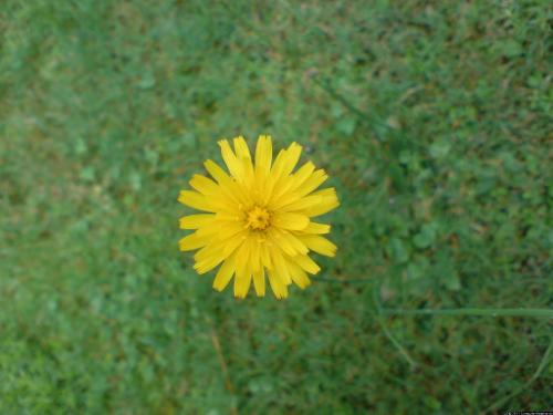 Eine Blüte aus der Nähe