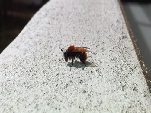 Biene nimmt ein Sonnenbad