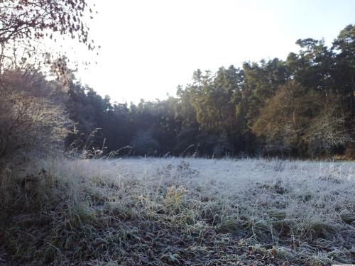 Eine frostige Lichtung im Wald.